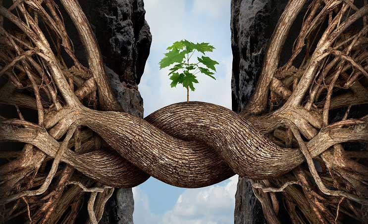 el poder de la resiliencia en trading